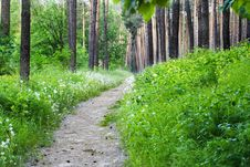 Free Empty Hiking Trail With Green Grass And Trees Stock Images - 8761024