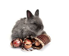 Free Easter Bunny 1 Stock Photography - 8761472
