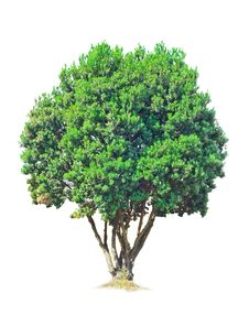 Free Isolated Tree Stock Photos - 8761493