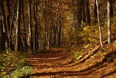 Free Mellow Autumn Royalty Free Stock Photos - 8762228