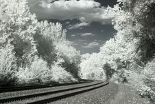 Free Infrared Railroad Tracks And Trees Royalty Free Stock Images - 8762709
