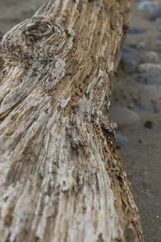 Free Weathered Log Stock Photos - 8762843