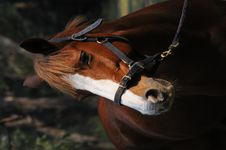 Free Beautiful Horse Royalty Free Stock Photos - 8763808