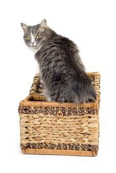 Free Gray Cat Royalty Free Stock Photo - 8764655