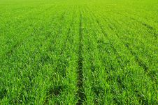 Free Grass Texture Stock Image - 8765301