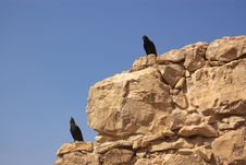 Free Black Birds On Stone Wall Stock Photos - 8767823