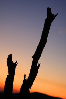 Free Tree Stumps In Sunset Royalty Free Stock Photo - 8768145