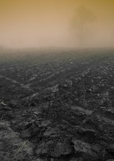 Free Foggy Morning Stock Photo - 8769700