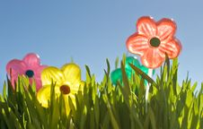 Free Spring Time Royalty Free Stock Images - 8769719