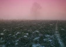 Free Foggy Morning Royalty Free Stock Photography - 8769747