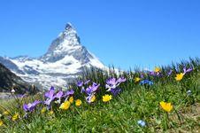 Free Flowers In Alpine Meadow Stock Photo - 87660830