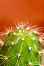 Free Green Cactus With Sharp Thorns Royalty Free Stock Photography - 8773827