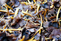 Free Mushrooms Royalty Free Stock Photography - 8776507