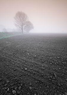 Free Foggy Morning Stock Photos - 8771063