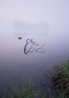 Free Foggy Morning Stock Images - 8771274