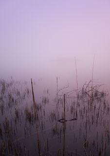 Free Foggy Morning Stock Photos - 8771593