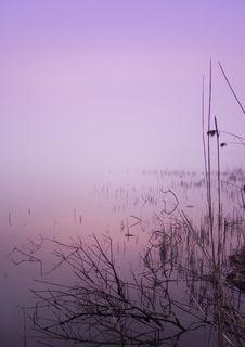 Free Foggy Morning Stock Images - 8771614