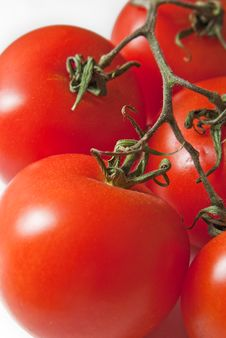 Free Fresh Tomato Royalty Free Stock Photos - 8774408