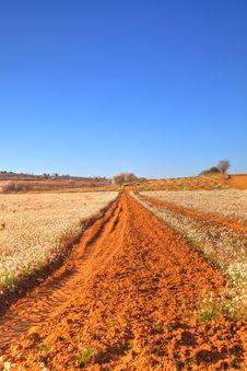 Free Path At Spring Stock Image - 8776951