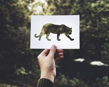 Free Tiger Cut Out On Card Stock Photos - 87781633