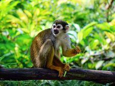 Free Brown Monkey On Tree Trunk Sitting Stock Image - 87782151