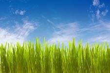 Free Grass Against Clouds Royalty Free Stock Image - 8780376