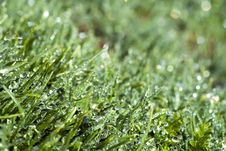 Free Grass Stock Photos - 8780433