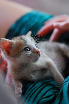 Free Baby Kitten In Lap Stock Image - 8780661