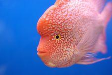 Fish On Blue Background Stock Photo