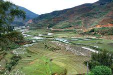 Free Terraced Rice Field In Sapa Royalty Free Stock Photo - 8786425