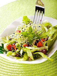 Free Salad Royalty Free Stock Photography - 8788617