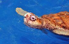 Free Turtle Sanctuary Royalty Free Stock Image - 8788946