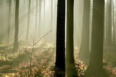 Free Misty Forest With Early Morning Sun Rays Stock Photos - 8789113