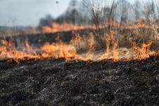 Free In The Field Burning Grass, Shrubs And Plants Are Burned, Land Covered With Dark, Early Spring Stock Photos - 87820833