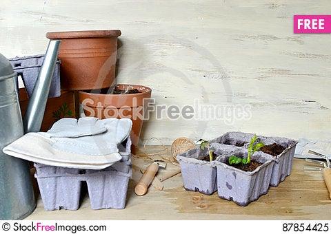 Free Planting Seedling Royalty Free Stock Photo - 87854425