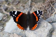 Free Butterfly On Rock Royalty Free Stock Images - 87853339