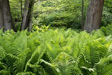Free Royal Fern Bed Under Tree Canopy Stock Photo - 87854410