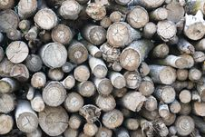 Free Pile Of Wood Logs Stock Photos - 87854553