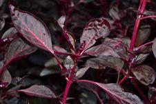 Free Garden-croton-shrub Stock Photo - 87854760