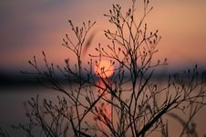 Free Silhouette Of Bare Tree During Sunset Stock Images - 87855204