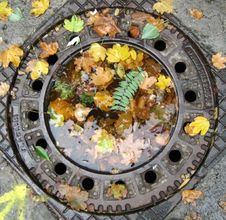Free Leaves-in-sewer-lid-puddle Royalty Free Stock Image - 87855896