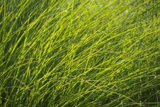 Free Green Grass In Soft Light Stock Image - 87856231