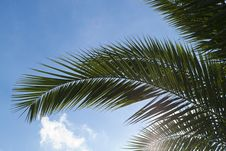 Free Palm Tree Leaf Against Blue Sky Royalty Free Stock Photos - 87856378