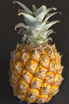 Free Miniature Pineapple Fruit Stock Photos - 87856413