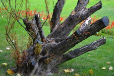 Free Trimmed-tree-branches Royalty Free Stock Images - 87859319