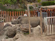 Free Rhinoceros Royalty Free Stock Photography - 87864527