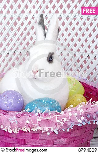 White Rabbit in Easter Basket with Easter Eggs Stock Photo