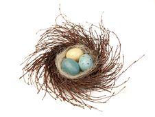 Bird S Nest With Eggs Stock Photos