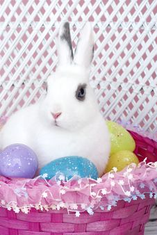 White Rabbit In Easter Basket With Easter Eggs Royalty Free Stock Images