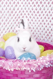 White Rabbit In Easter Basket With Easter Eggs Stock Photos